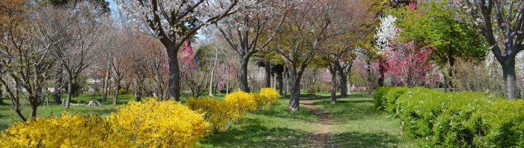 八千代市指定管理公園_村上緑地公園_メイン画像