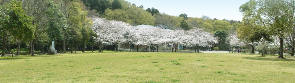 八千代市指定管理公園_八千代台近隣公園_メイン画像