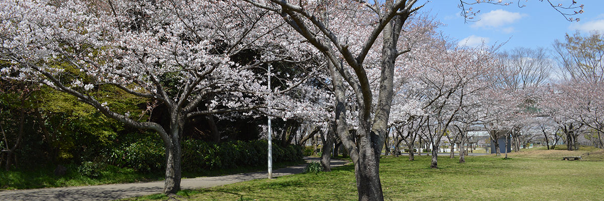八千代市指定管理公園_メイン画像2